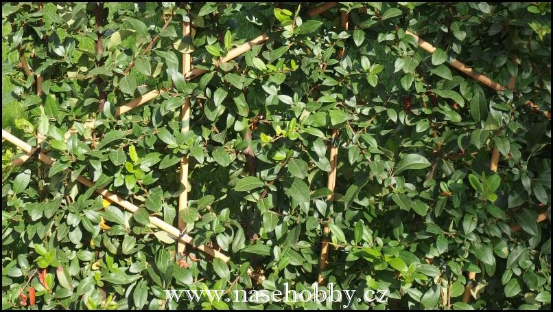 opěrky pro rostliny
